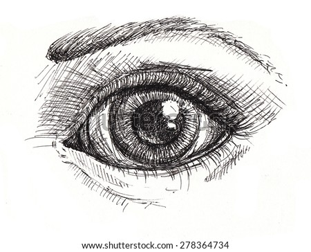 Black and white drawing of eye and eyebrow . Hand drawn illustration