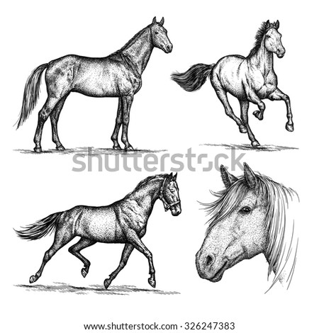 black and white engrave isolated horse on white background