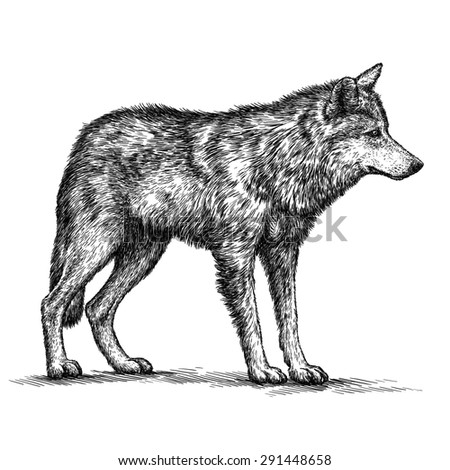 black and white engrave isolated wolf - stock photo