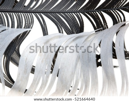 black and white feather on a white background