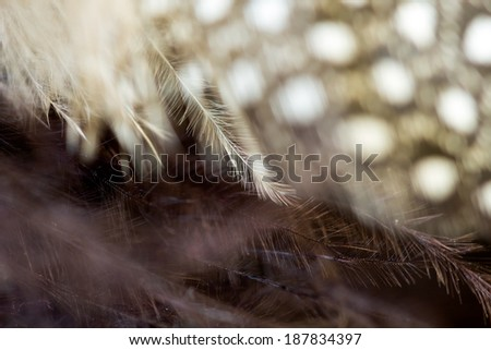 Black and white feather with dark background