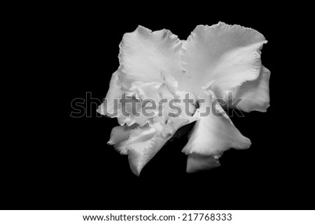black and white flower isolated on a black background