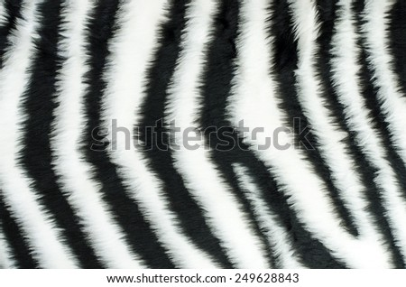 Black and white fur zebra pattern. Animal print as background.