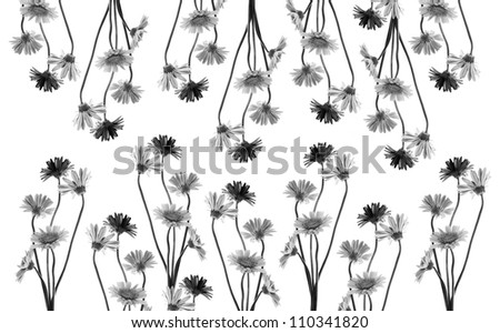 black and white gerbera flower horizontal seamless pattern