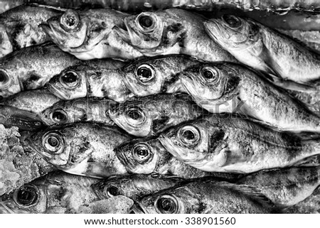 Black and white grunge background of frozen fish in the market. - stock photo