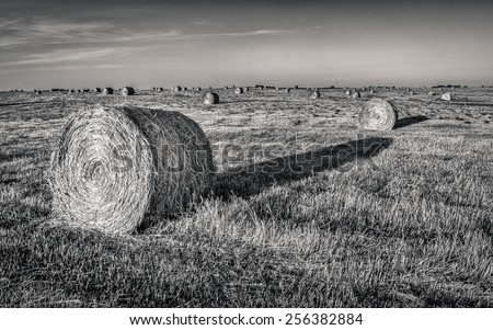 black and white hay bale on the left with shadow stretching to the right and smaller hay bales in the background - stock photo