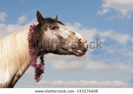 Black and white horse wearing a tinsel scarf - stock photo