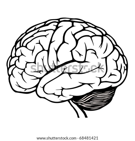 black and white human brain. jpg - stock photo