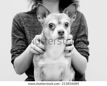 black and white image, Funny dog - stock photo