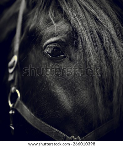 Black-and-white image of a muzzle of a horse close up. - stock photo