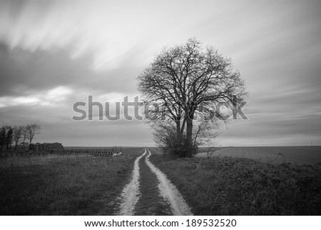 Black and white image of lonely tree in a field - stock photo
