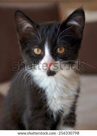 Black and white kitten                 - stock photo