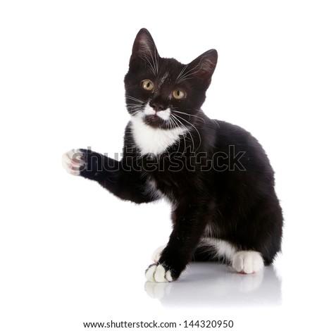 Black and white kitten. Curious kitten. Kitten on a white background. Small predator. - stock photo