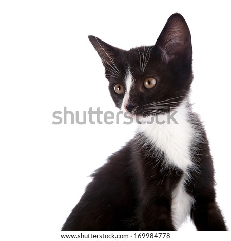Black and white kitten. Curious kitten. Kitten on a white background. Small predator.