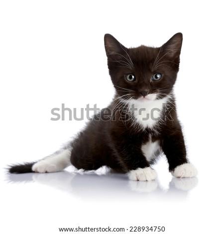 Black and white kitten.  Fluffy black kitten. Kitten on a white background. Small predator. Black kitty. Small cat. - stock photo