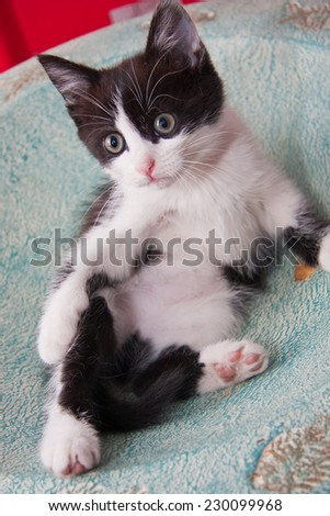 Black and white kitten laying in a bowl on a table - stock photo