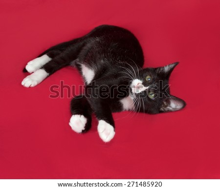 Black and white kitten lying on red background