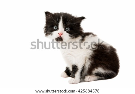 black and white kitten on a white background