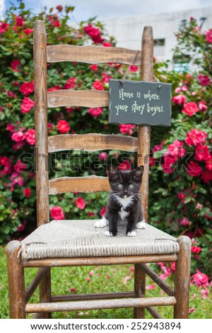 Black and white kitten on a wooden chair in the garden - stock photo