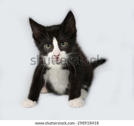Black and white kitten sitting on gray background