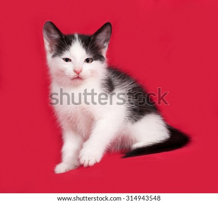 Black and white kitten sitting on red background