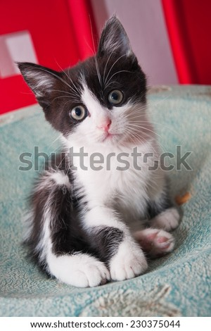 Black and white kitten sittingin a bowl on a table  - stock photo