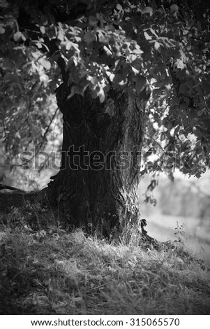 black and white landscape with a lone tree in the forest - stock photo