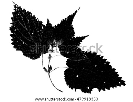 Black and white leaf illustration.