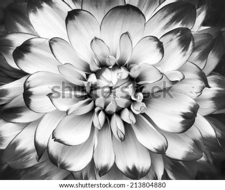 black and white macro shot of flower  - stock photo