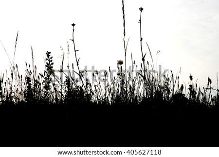 Black and white meadow  - stock photo