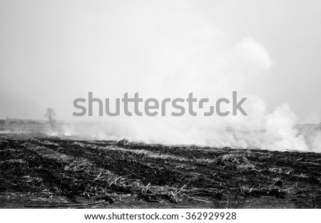 Black and white of wildfire and smoke cause the air pollution and global warming - stock photo