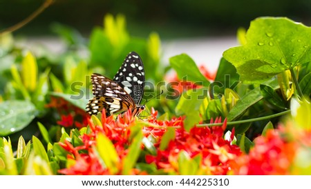 Black and white patterned Butterfly were caught sucking nectar from red flower spike and gourd vines.