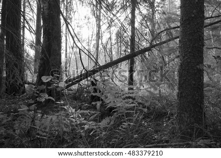 Black and white photo of a natural forest in sweden