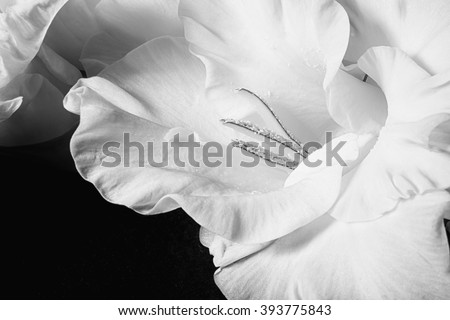 Black and white photo of gladiolus flowers closeup