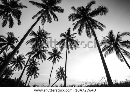 Black and white photo of palm trees - stock photo