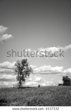 Black And White Photo Of Single Tree