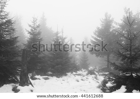 black and white photo of spruce forest in winter on misty day - stock photo