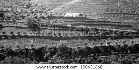 Black and white photo of the Douro Valley in Portugal and vineyards in the mountains and the farm - stock photo