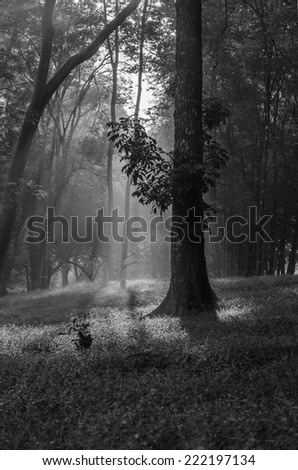 Black and white photo of the sunset in the woods - stock photo
