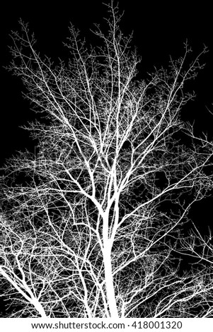 black and white photo, white tree branches on a black background - stock photo