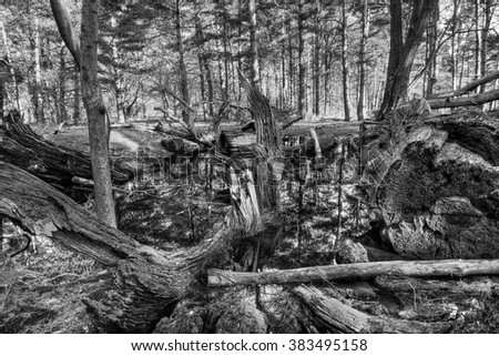 Black and White photograph of a small pool in a forest partly filled with fallen, rotting trees. - stock photo