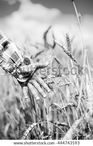 Black and white photography of harvest concept. Child touching wheat ears in the boundless field. Little boy playing with nature when the sun is shining.