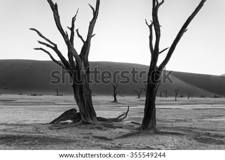 Black and white picture of scorched dead trees in front of sand dunes with the sun rising behind them in Deadvlei, Namib-Naukluft National Park, Namibia