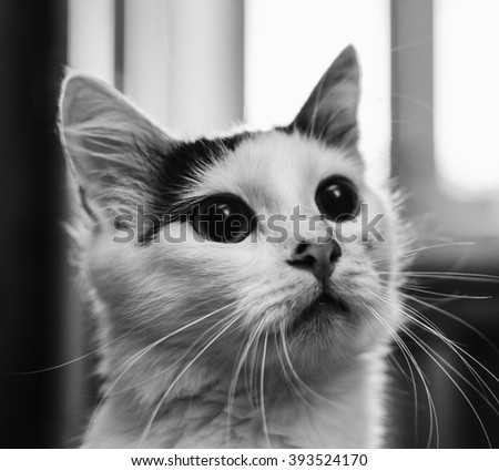 Black and white portrait of the cat on the home window - stock photo