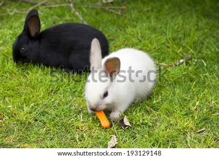 Black and white rabbit babies eating carrots. - stock photo