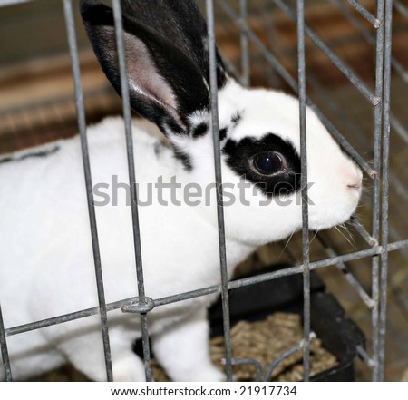 Black and white rabbit in a cage