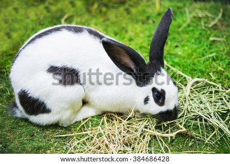 Black and white rabbit in the park.