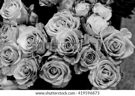 black and white rose stock images royaltyfree images