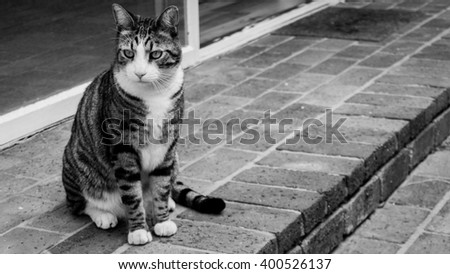 Black and white shot of domestic cat sitting on hind legs.