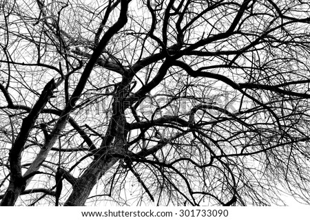 Black and white silhouette tree branches for abstract art photography in nature concept